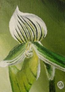 Day 1: Little Green Orchid